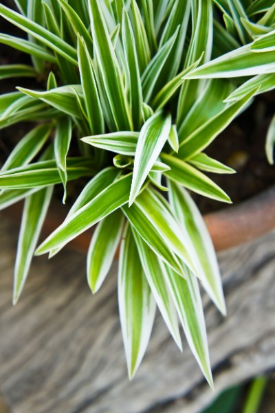 Clear the air with these five clean-air plants.